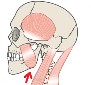 咬筋の画像2