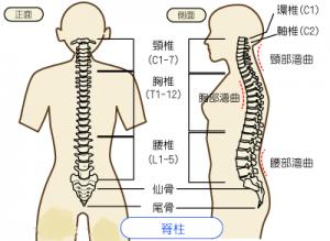 脊柱・脊髄画像