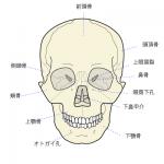 頭蓋骨美容小顔矯正は小顔だけじゃない効果!