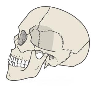 頭蓋骨 縫合